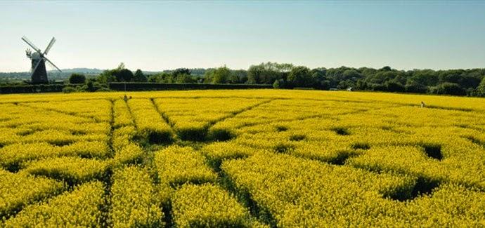 Visitare il Wiltshire per i cerchi nel grano