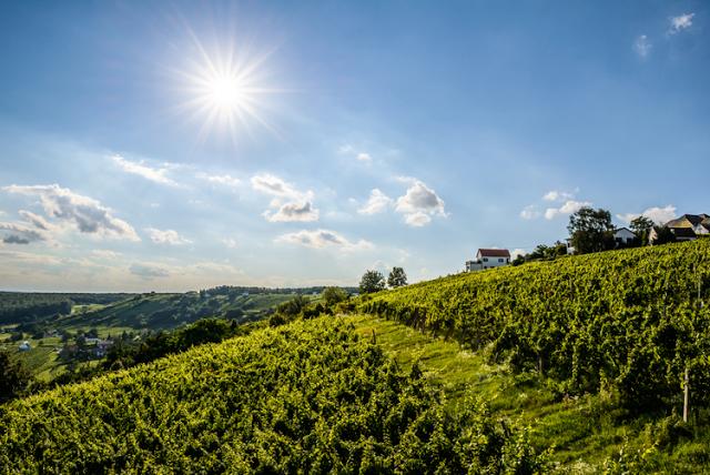 Viaggio alla scoperta del Burgenland, in Austria