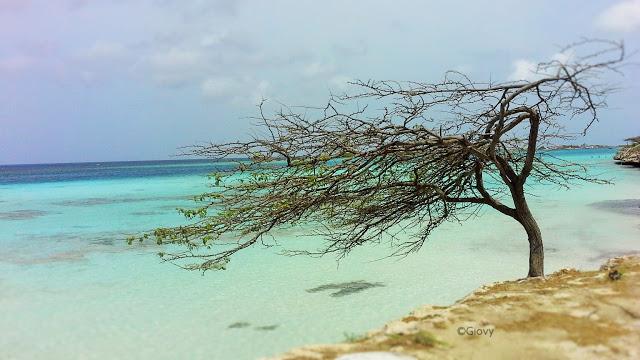 Viaggio ad Aruba